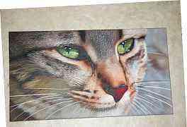 """Картина """"Кошка"""" полотно 90х50см. художник Богуслав"""