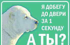Табличка с фотографией Вашей собаки