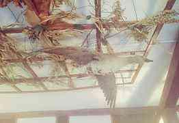 Чучело утки